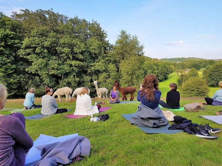 Yoga # Natur# Alpakas # Yoga in der Natur #Sprockhövel# Love